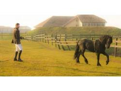 Initiation in horse riding in Alba Iulia